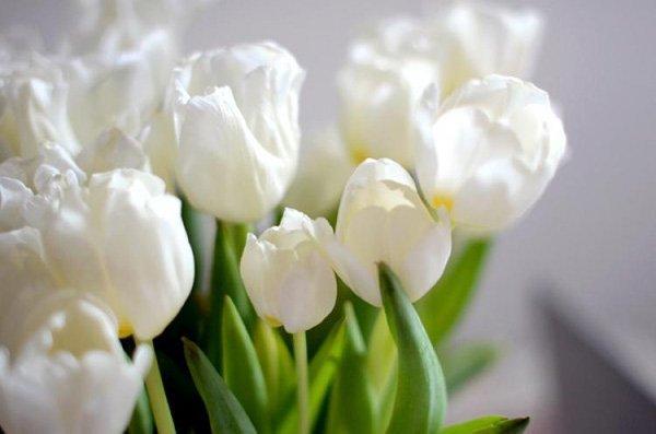 Hochzeit Tulpen (1)