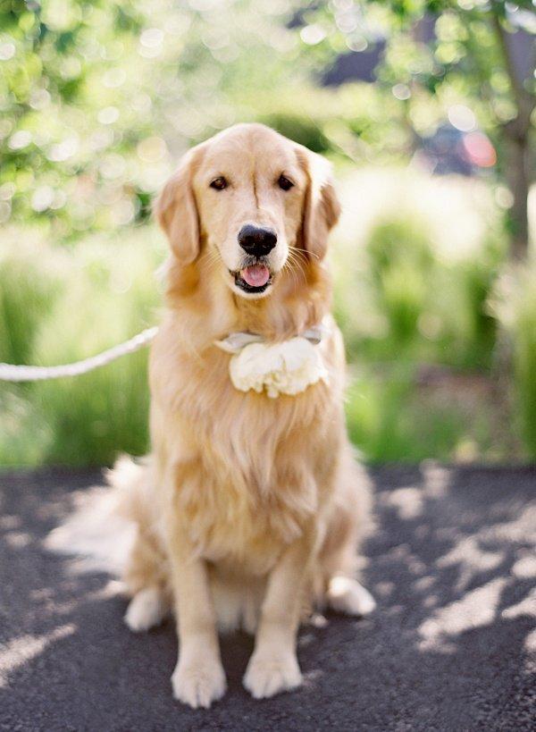 Dog Collar Wedding Ring