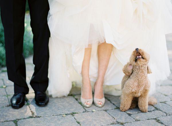 Hochzeit mit Hund (5)
