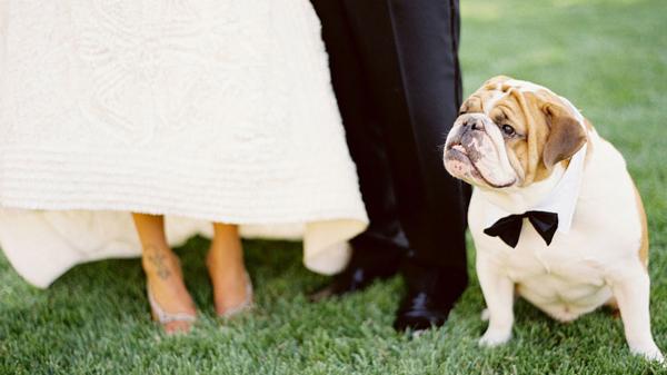 Hochzeit mit Hund (7)