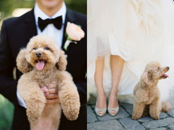 Hochzeit mit Hund (8)