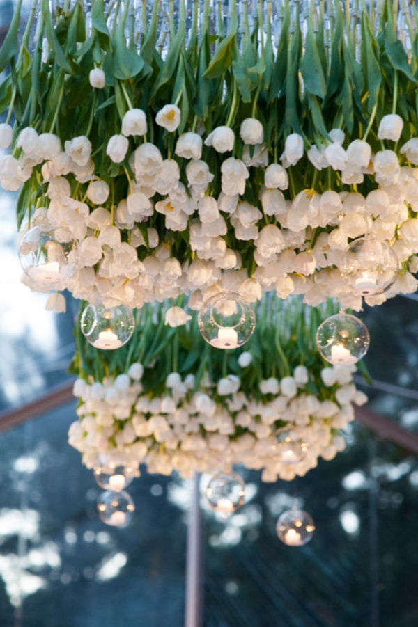 tulpen haengend