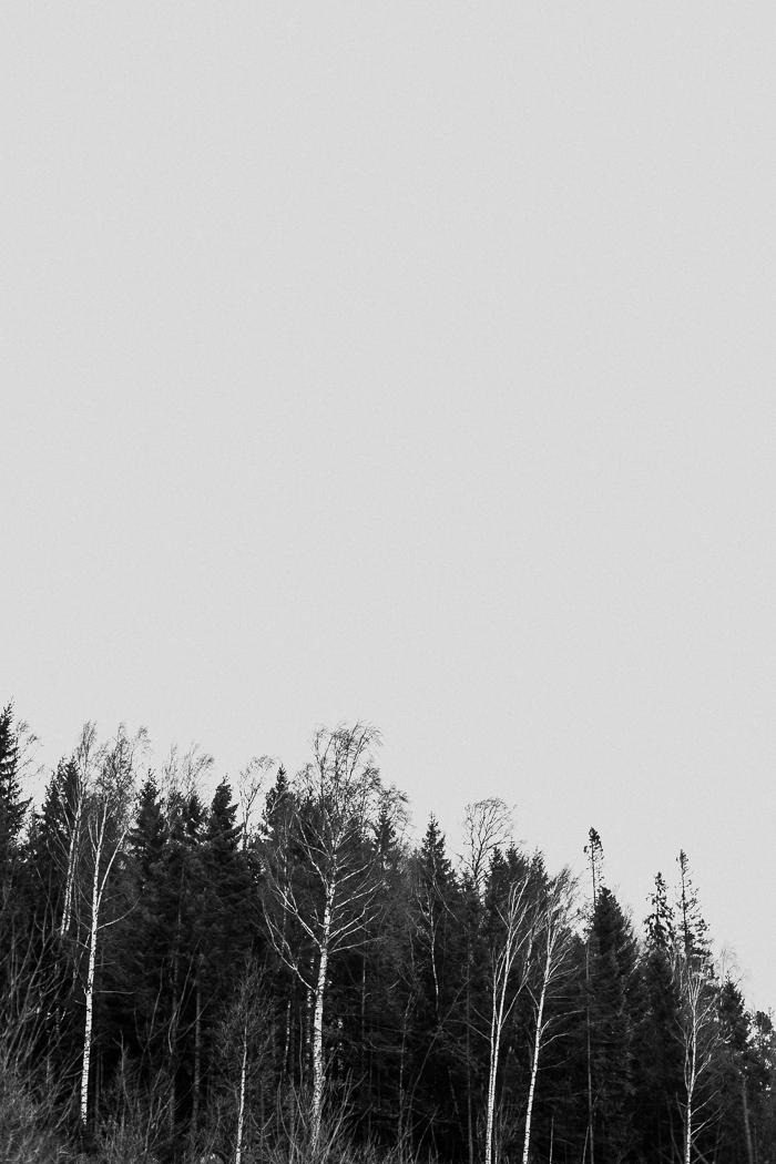 loveshoot schweden (2)