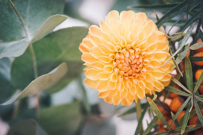 Hochzeitsdeko Orange (12)