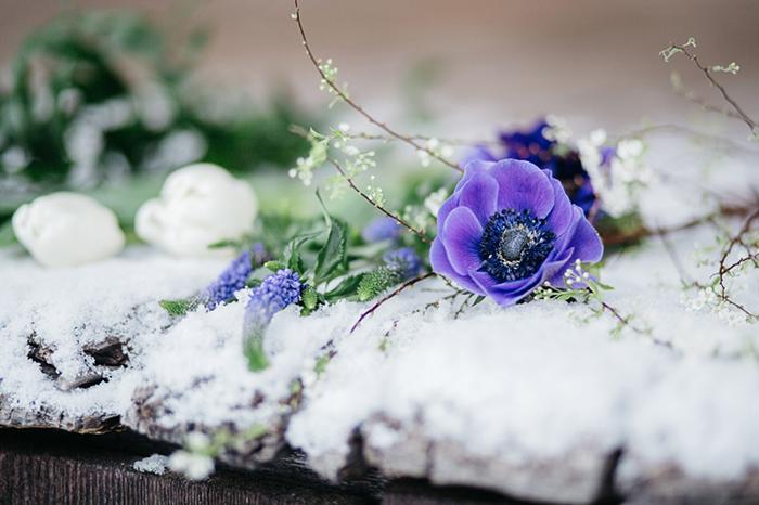 blaue anemone (2)