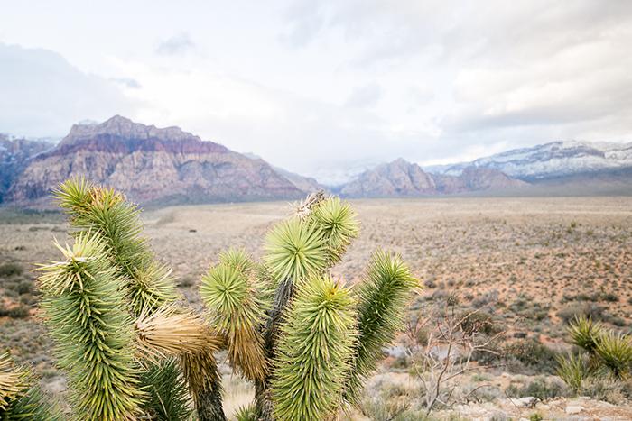 Wueste Nevada (2)