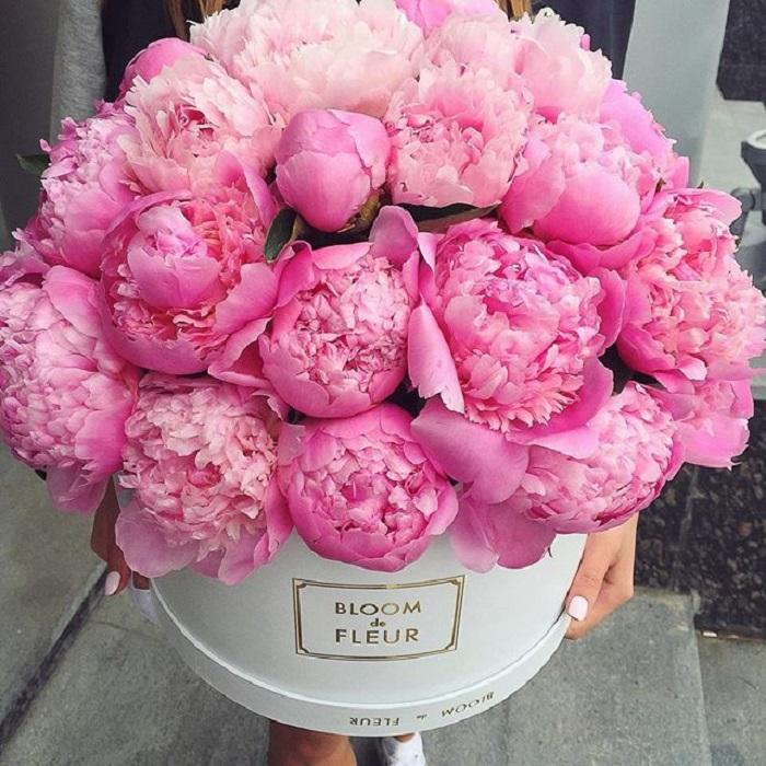 pfingstrosen pink