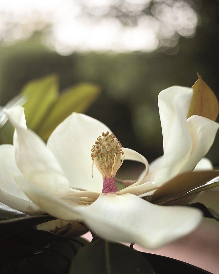 Orchidee Hochzeit