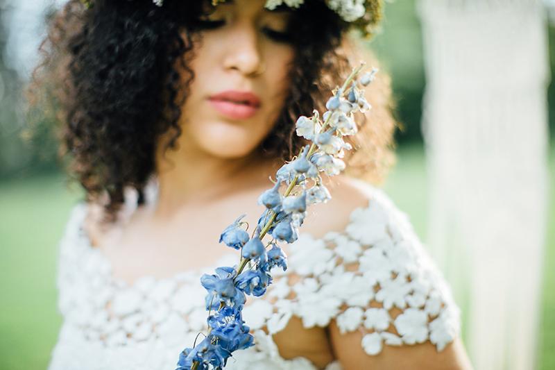 blaue-trockenblume