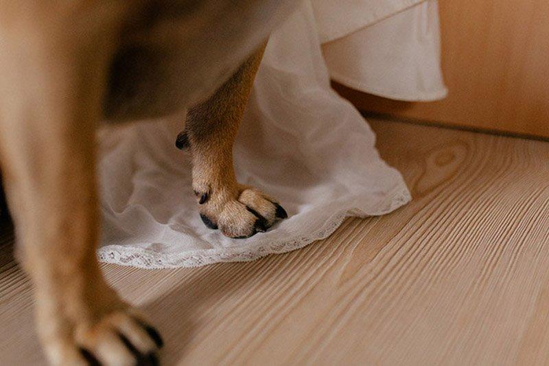 bridal-boudoir-hochzeitsgeschenk-sina-fischer-bridal-robe-lunga-hund-und-braut-13