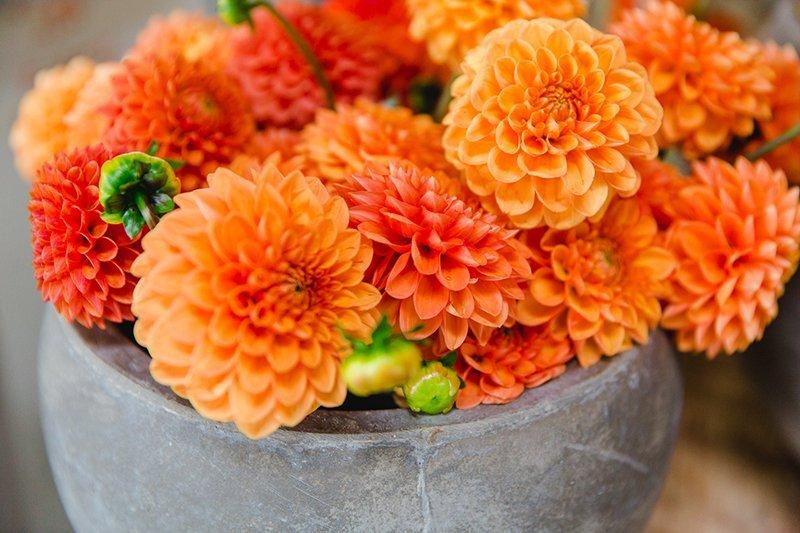 dahlien-orange