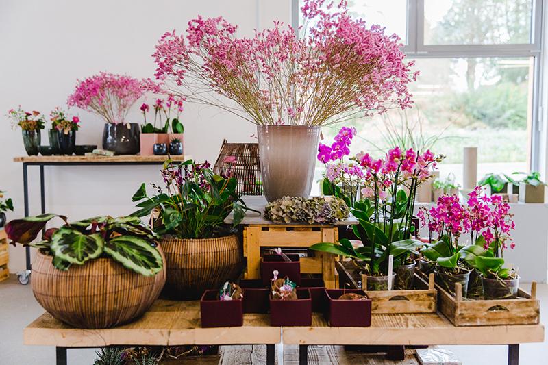 orchideen-pink