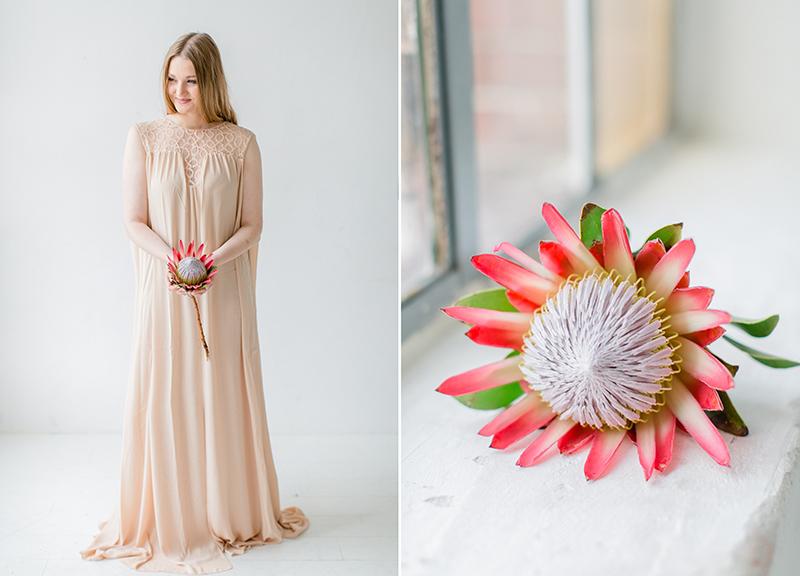 protea-pink