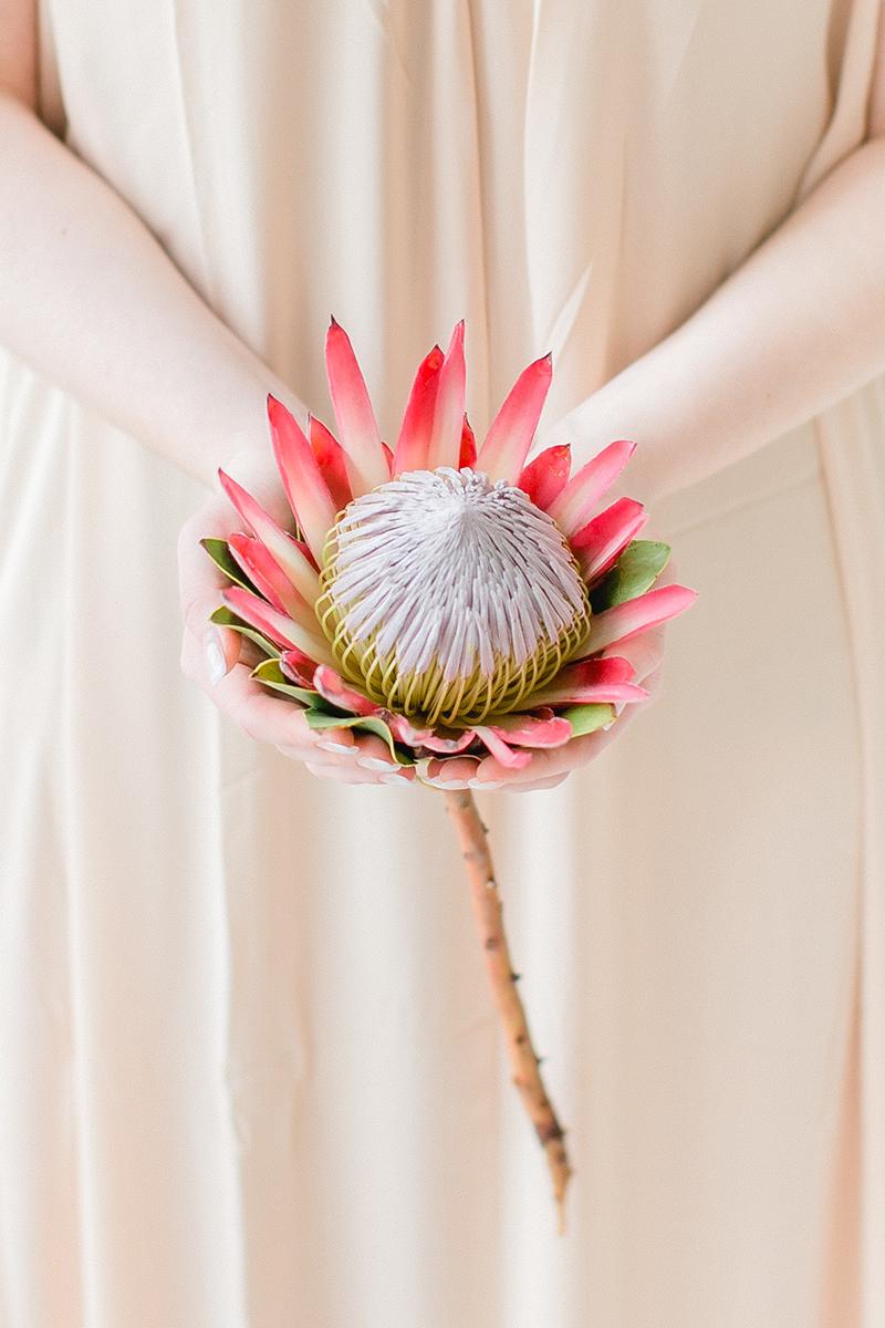 grosse-protea