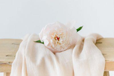Blume des Monats Mai: Pfingstrose