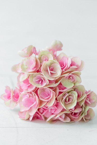 Blume des Monats August: Hortensie