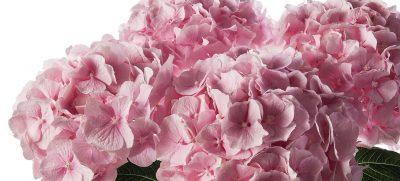 Die beliebtesten Hochzeitsblumen