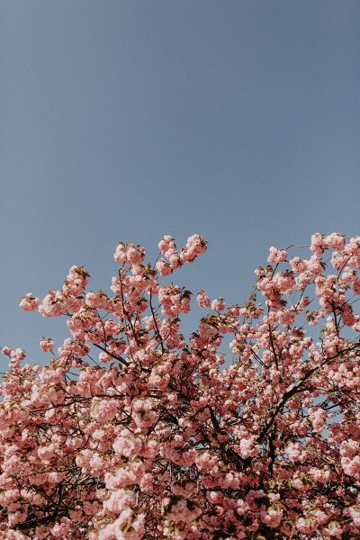 Spring Vibes: Kirschblüten Editorial